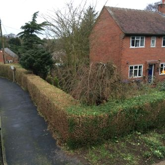 House Hedge After