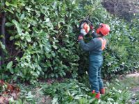 HEDGE AND CONIFER REDUCTION AND HEDGE CUTTING