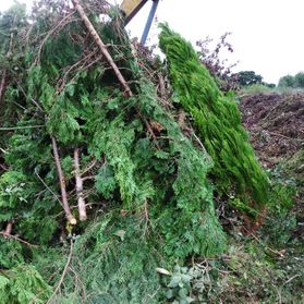 Garden Waste Conifers